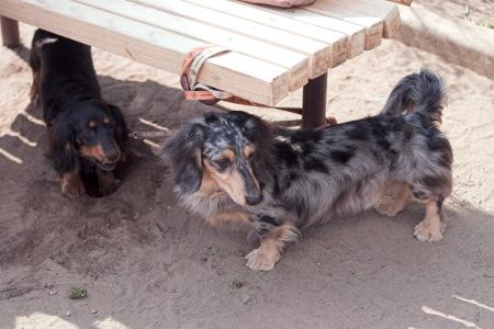 からまり犬と穴掘り犬