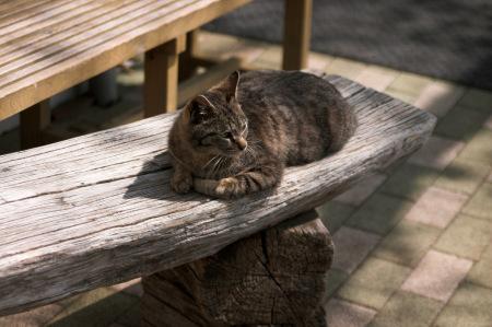 ベンチの上のネコ