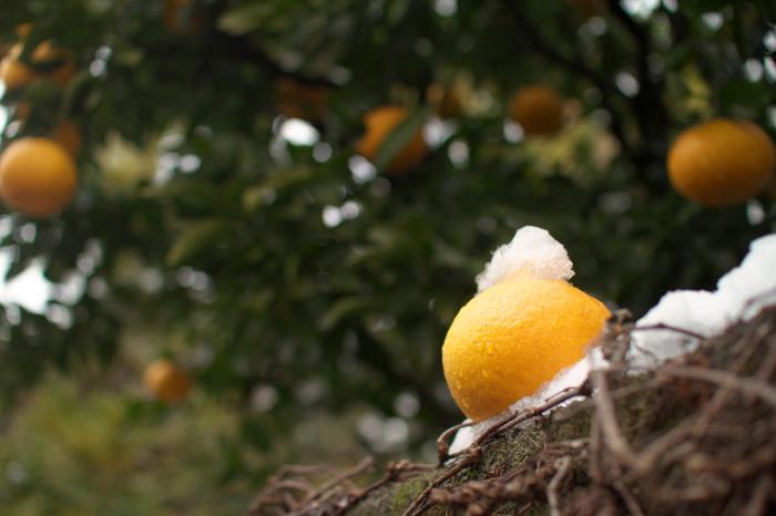 雪景色・柑橘系