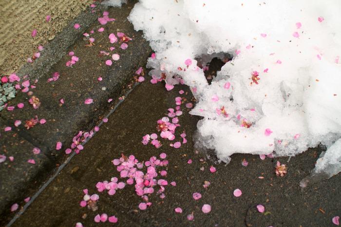 雪景色・花