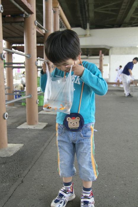 金魚を窺う
